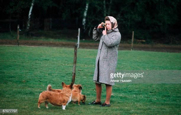 Queen Elizabeth II photographing her corgis at Windsor Park in 1960 in Windsor, England.