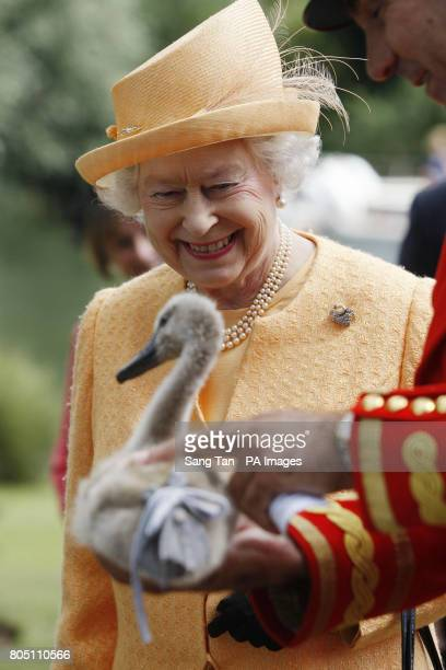 Queen Elizabeth II smiles as she is being shown a orphaned cygnet at Oakley Court on the river bank during the swan upping census on the River Thames...
