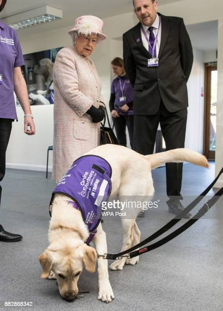 Queen Elizabeth II watches a demonstration by Labradors of the 'Canine Partners' charity on November 30 2017 in Midhurst England