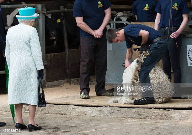 Queen Elizabeth II watches sheep shearing as she visits Myerscough College at Lodge Livery Yard on May 29 2015 in Lancaster England