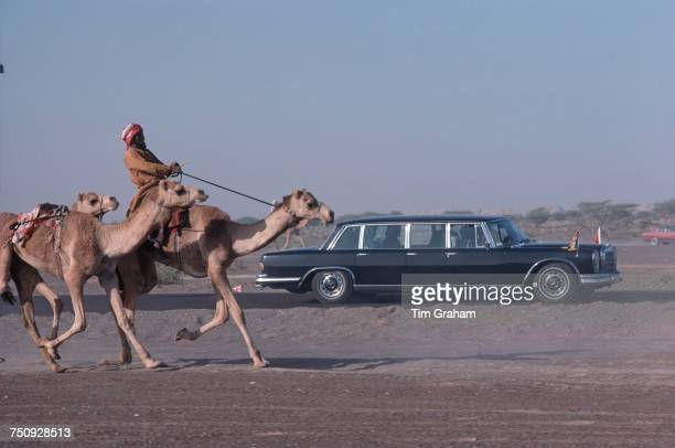 Queen Elizabeth II's Mercedes limousine receives a camel escort Al Ain Abu Dhabi United Arab Emirates during the queen's tour of the Gulf States...