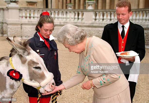 Queen Elizabeth ll feeds a donkey who was rescued from slaughter and set out from Balmoral Castle on The Queen's 72nd birthday on April 21 and...