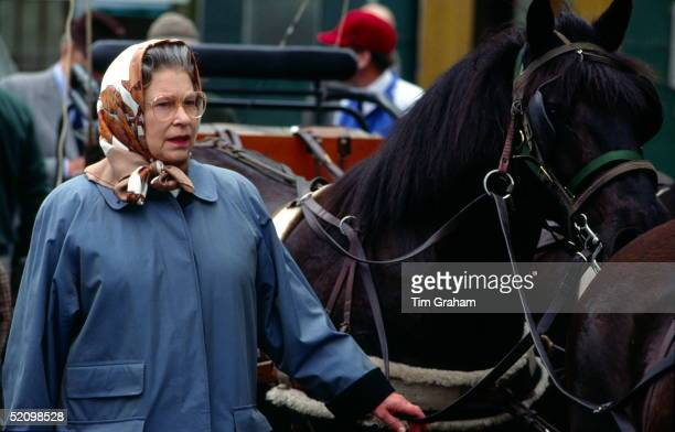 Queen Elizabeth Ll In A Raincoat And Scarf Checking Her Husband's Team Of Fell Ponies At The Royal Windsor Horse Show In The Grounds Of Windsor Castle