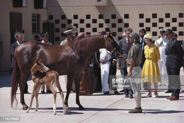 Queen Elizabeth ll inspecting horses including a dayold thoroughbred at the stables of Qaboos bin Said al Said Sultan of Oman in Muscat during a...