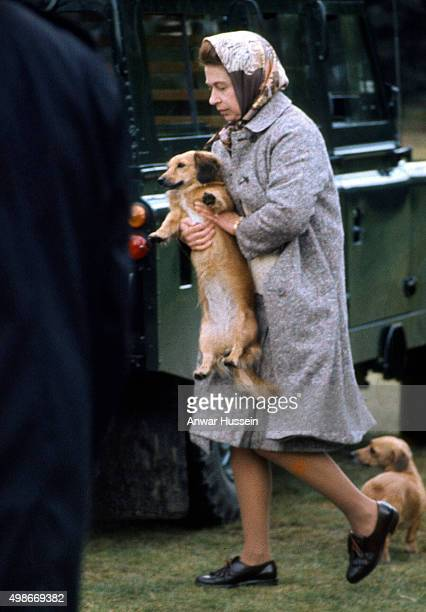 Queen Elizabeth ll relaxes with her pet corgis in Windsor Great Park on May 01 circa 1977 in Windsor England
