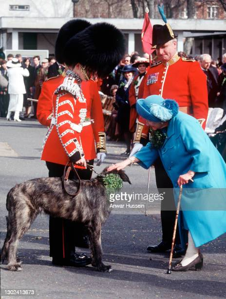 Queen Elizabeth, the Queen Mother presents a shamrock to the wolfhound mascot during the St. Patrick's Day parade on March 17, 1996 in...