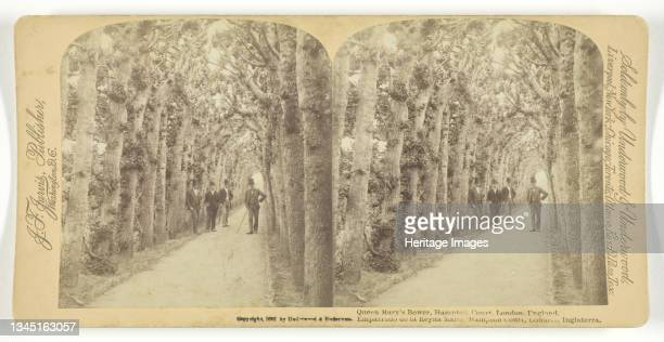 Queen Mary's Bower, Hampton Court, London, England, 1892. [A clipped hornbeam tunnel constructed of oak with small viewing windows, one of two raised...