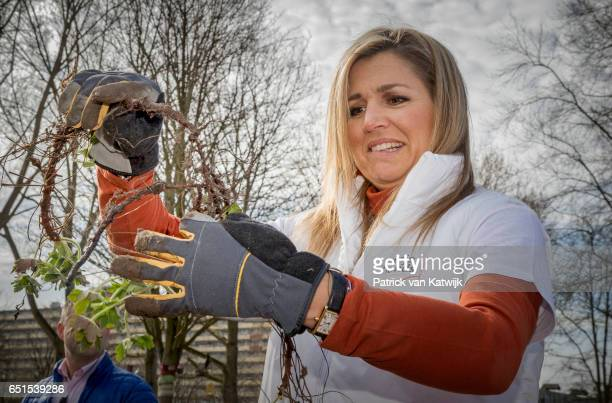 Queen Maxima of the Netherlands volunteering for NL Doet in the neighborhood garden on March 08 2017 in Breda Netherlands NL Doet is a National...
