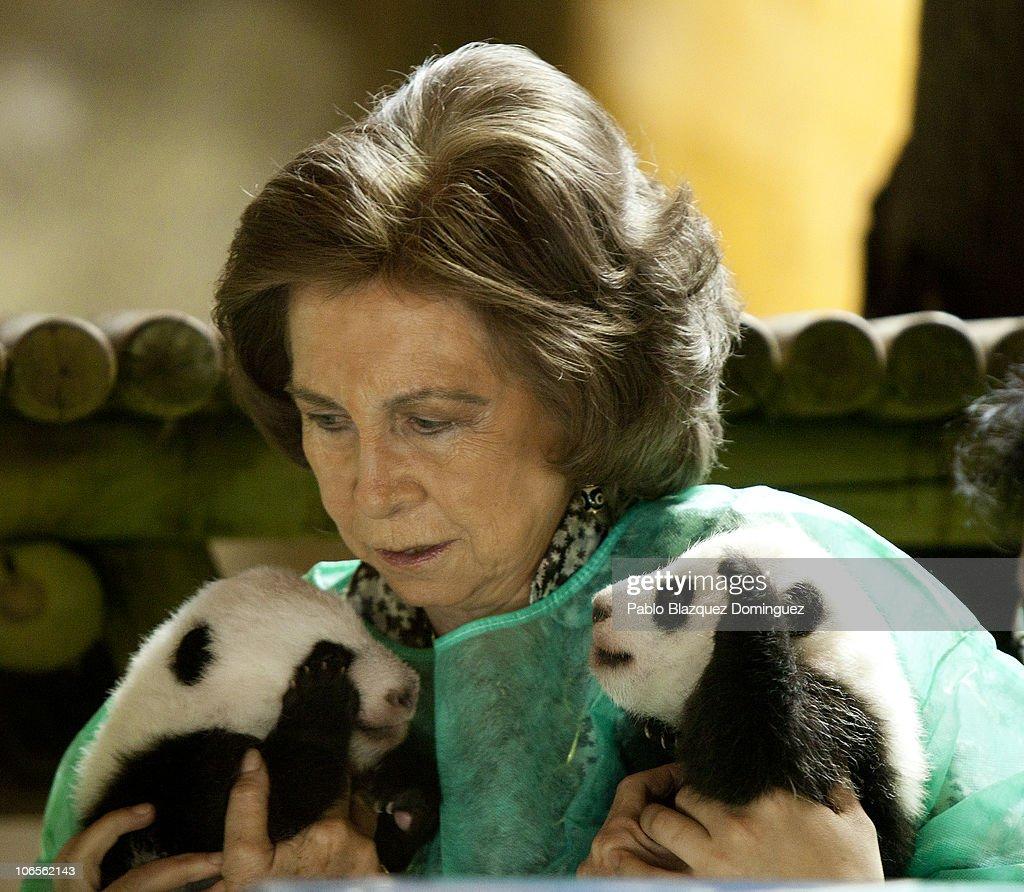 Queen Sofia of Spain Visits Madrid Zoo Acquarium : News Photo