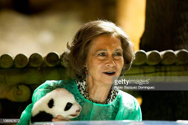 Queen Sofia of Spain Visits the baby panda bears at Madrid Zoo Acquarium on November 5 2010 in Madrid Spain