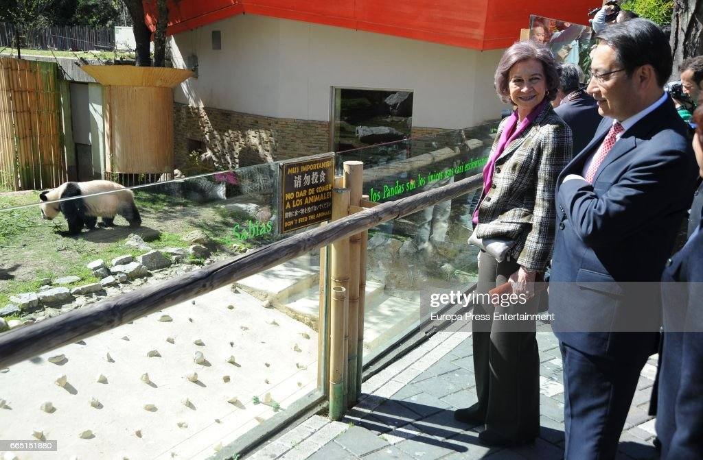 Queen Sofia Attends The First Outing Of The Panda Bear Chulina At Zoo Aquarium Madrid : News Photo