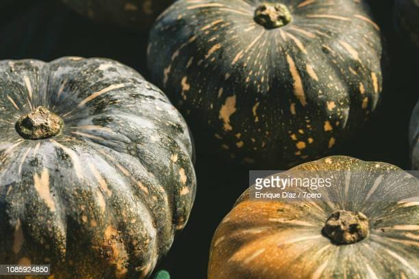 Queensland Blue Pumpkins 1