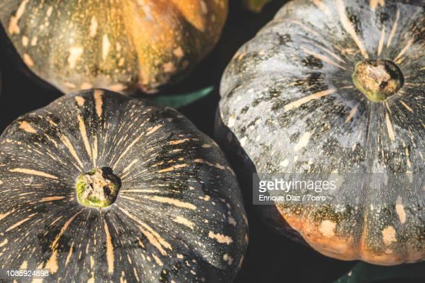 Queensland Blue Pumpkins 2
