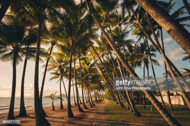 queensland palm tree sunrise