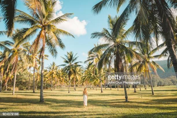 queensland palm tree tourist