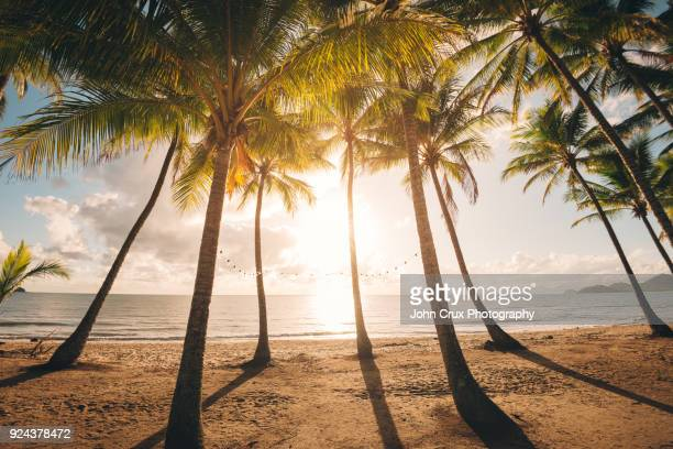 queensland palm trees