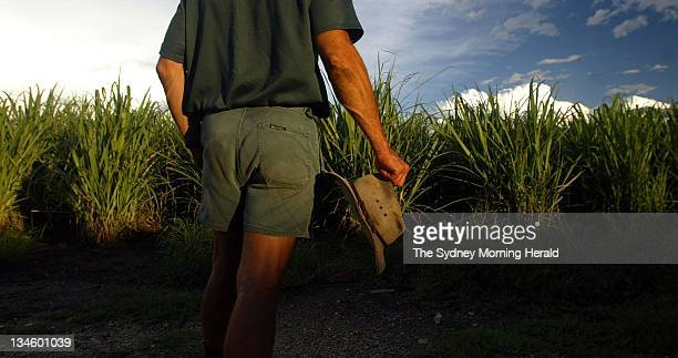 Queensland Sugar Cane farmer Greg Zipf on his farm in Woongoolba between Brisbane and the Gold Coast Image shows Greg with his cane fields 29 January...
