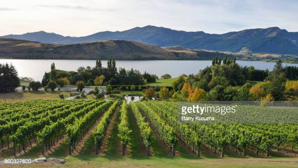 queenstown nature. - otago region stock pictures, royalty-free photos & images