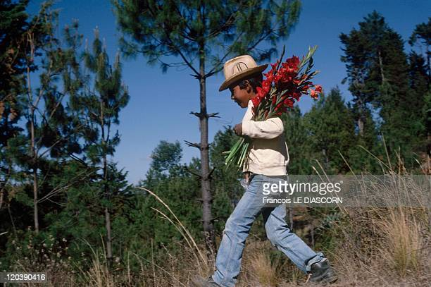 Quetzaltenango Guatemala A young boy with flowers