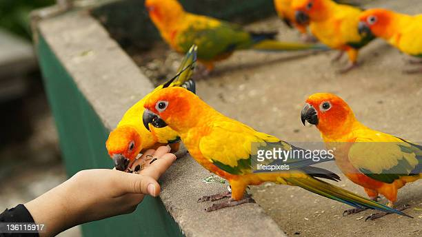queue of parrots - lifeispixels stock pictures, royalty-free photos & images