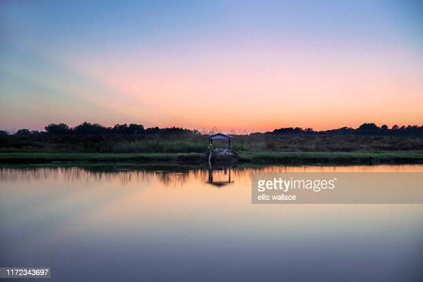 a quiet and gentle image of a small lake at sunset in the southern town of moultrie, ga. - georgia country stock pictures, royalty-free photos & images
