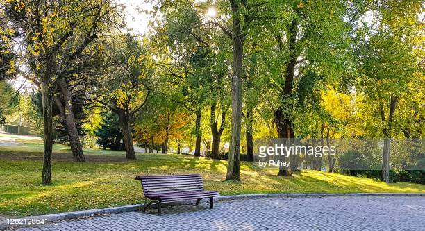 quiet area of a public park on a sunny autumn afternoon - park bench stock pictures, royalty-free photos & images