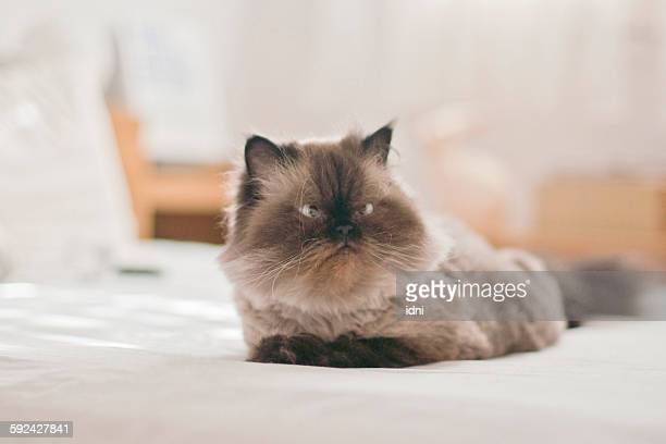 Quiet cat on the bed