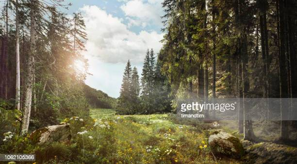 quiet forest and light beams - landschaft stock-fotos und bilder