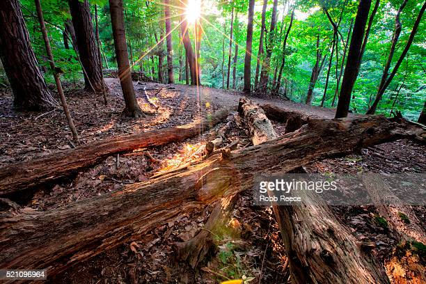 quiet forest landscape with fallen logs and evening sun bursting through the trees - robb reece stockfoto's en -beelden