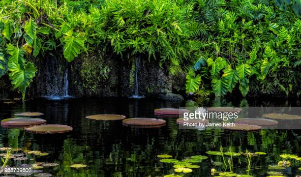 A quiet pool with a single water lily flower surrounded by lily pads of various types.