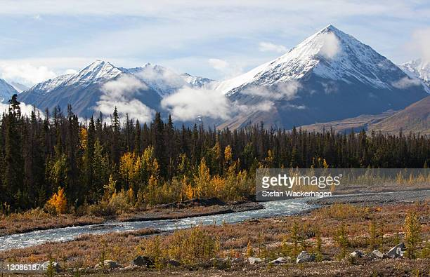 quill creek, indian summer, leaves in fall colours, autumn, st. elias mountains, kluane national park and reserve behind, yukon territory, canada - wildlife reserve stock pictures, royalty-free photos & images