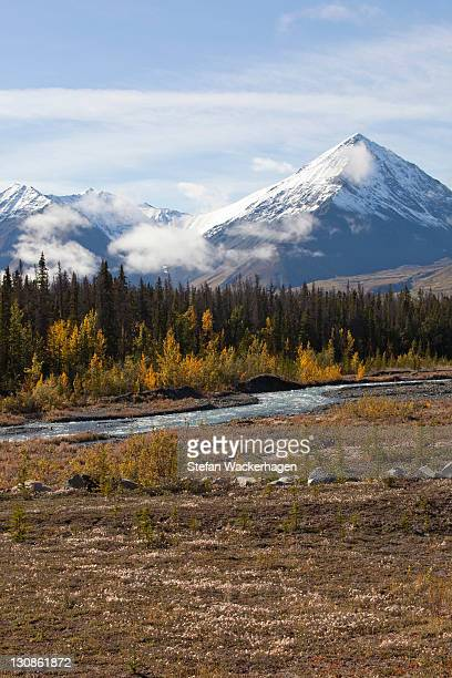 Quill Creek, Indian summer, leaves in fall colours, autumn, St. Elias Mountains, Kluane National Park and Reserve behind, Yukon Territory, Canada