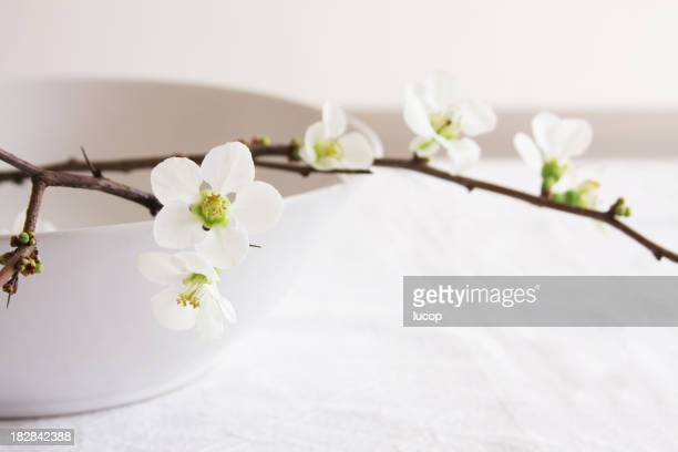 Quince branch with white flowers on white bowl on table