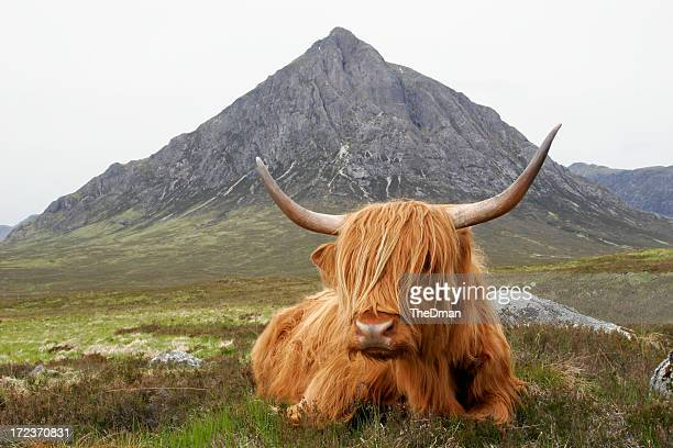 quintessential scotland - grampian scotland stock pictures, royalty-free photos & images