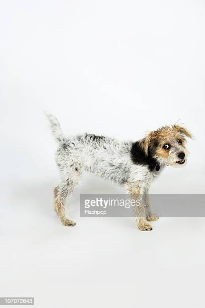 Quirky portrait of cross breed dog