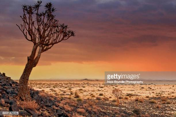 Quiver Tree and Rocky Landscape, Namibia