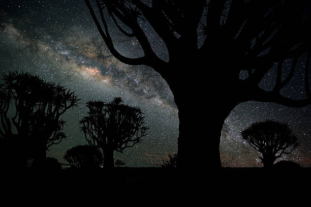 Quiver trees and the Milky Way