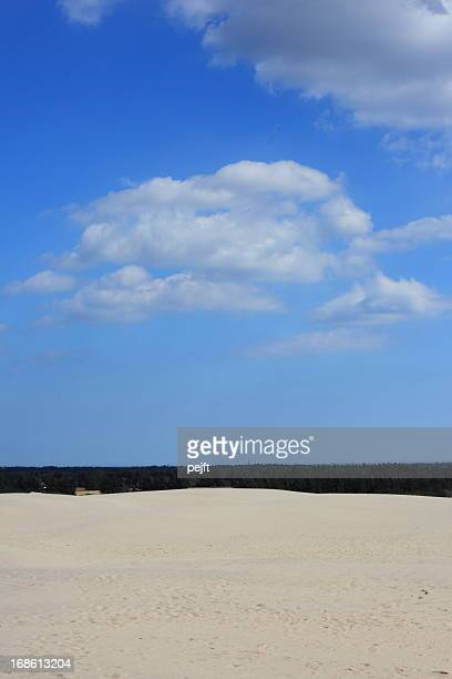 raabjerg mile migrating sand dune, skagen - denmark - pejft stock pictures, royalty-free photos & images