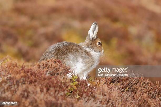 Rabbit Amidst Plants On Field