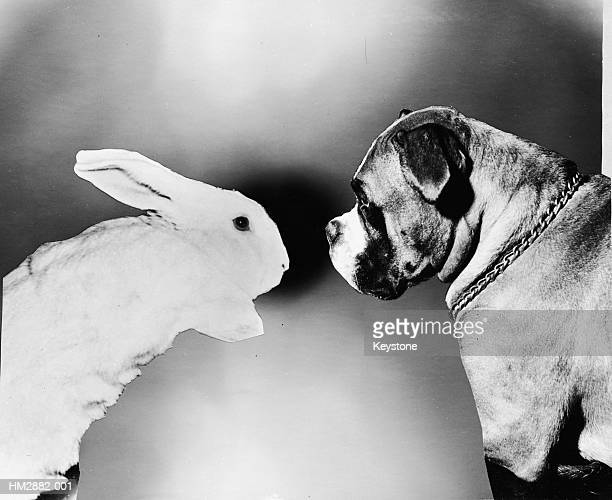 rabbit and dog - 1961 stock pictures, royalty-free photos & images