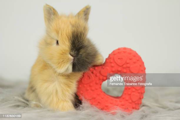Rabbit and red heart