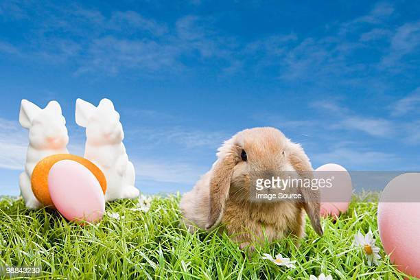 rabbit at easter - osterhase stock-fotos und bilder