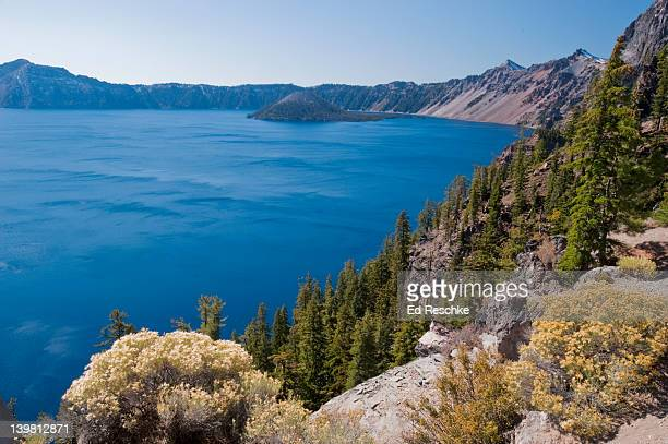 Rabbit brush (Chrysothamnus) in foreground, Wizard Island in background, Crater Lake National Park, Oregon, USA