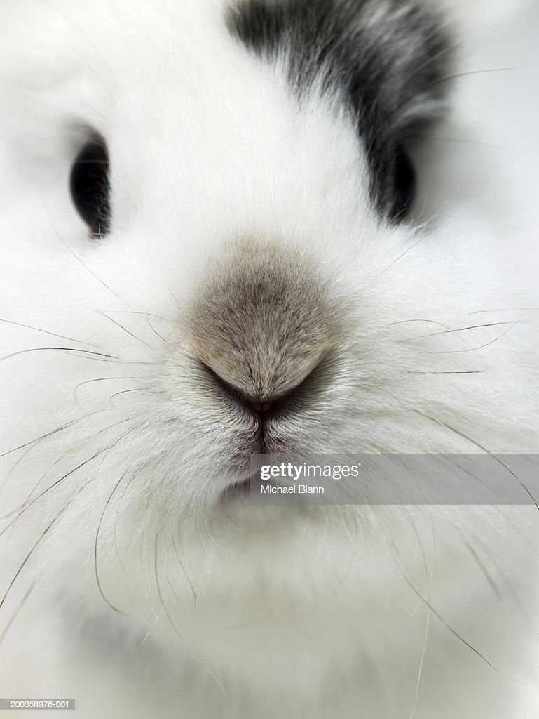 Rabbit, close-up : Foto de stock