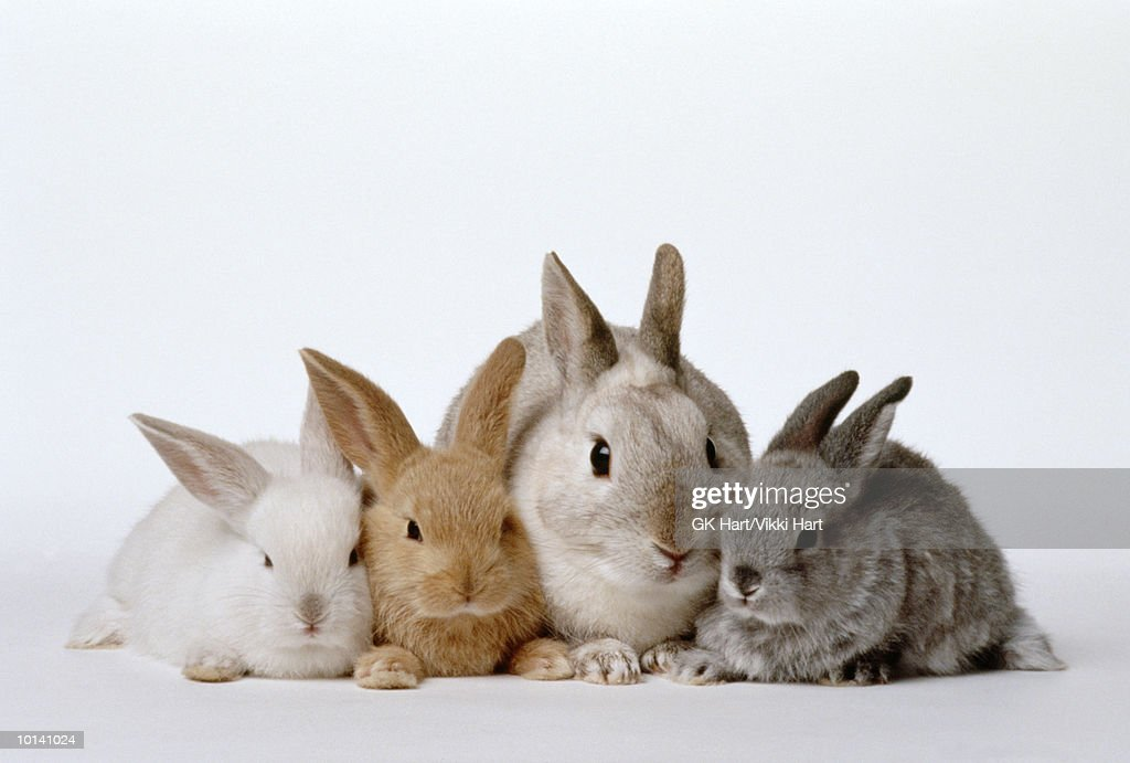 Rabbit doe and young : Stock Photo