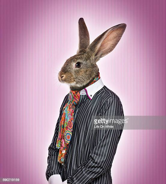 rabbit dressed - rabbit mask stock pictures, royalty-free photos & images