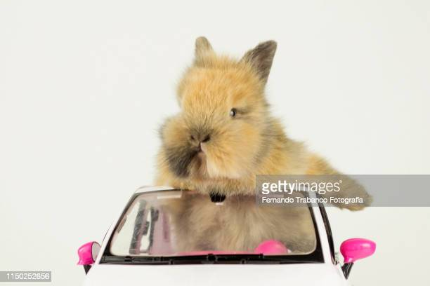 rabbit driving - green car crash stock pictures, royalty-free photos & images