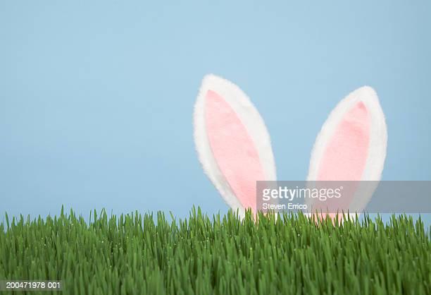 Rabbit ears and wheatgrass