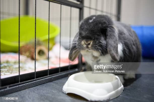 rabbit eating food - domestic animals stock pictures, royalty-free photos & images