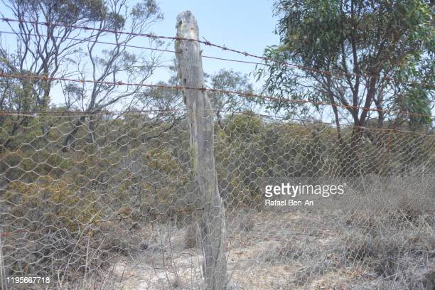 rabbit fence in south western australia. - rafael ben ari bildbanksfoton och bilder